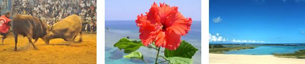 徳之島の魅力